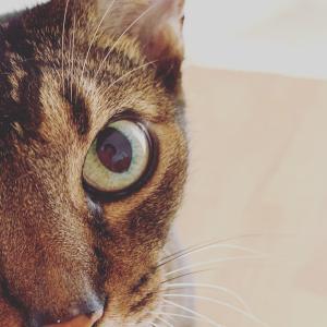 僕ら出逢えた奇跡とか。続・猫と横浜