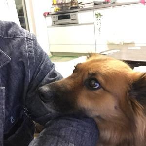 サンスベリアと保護犬メルシーと海 ついでにカブクワ