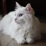 555nat.com「白猫屋」の番頭ブログ