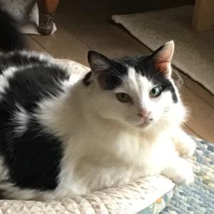 白猫屋ブログ