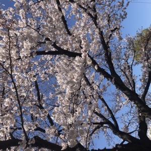 残り3ヶ月 ママ塾生活の記録【娘の中学受験2020】