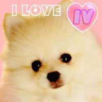 I LOVE IV~ポメラニアン日記~