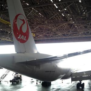 sou_antlers_airplane