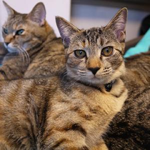 石垣島で里親募集猫カフェ開業を夢見るブログ