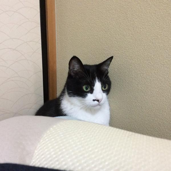 おしろい猫さんのプロフィール