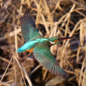 すぬ太の鳥撮りダイアリー