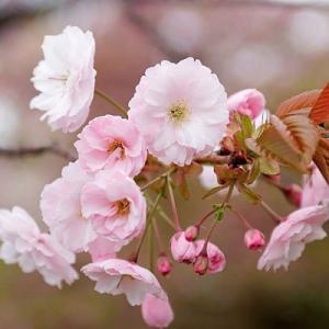 サラリーマン武術家が運営する花垣武学研究会のブログ