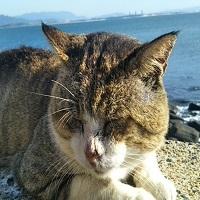 癒され猫ちゃんブログ