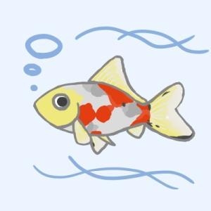 ちょびっと金魚