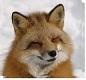 4匹の狐ちゃんとセイラのもふもふ生活