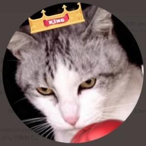 🥊🐱猫島拳太郎のブログ🐱🥊
