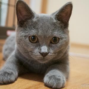 車と猫好き夫婦のブログ