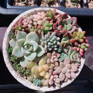 +PLANTS 多肉植物の育て方