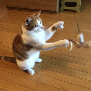 猫と暮らす素人鉄道模型の日記