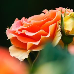 愛と祝福のスピリチュアルリズム