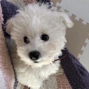 HSP人生どん底30才独身女が子犬を迎えてみた結果。。