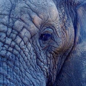 Elephant Daddy 研究所