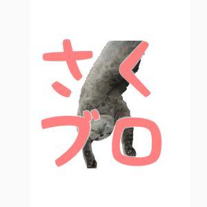 猫のさくらんぼ兄弟と私たちの湘南鎌倉日記ブログ