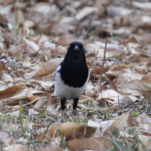 耳を澄ませば〜ソウルで野鳥観察