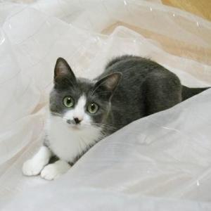猫ごはんと5匹のギャング