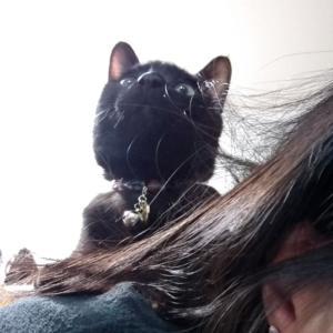 元野良猫ですが何か?