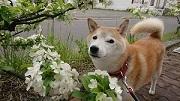 サビタの花さんのプロフィール