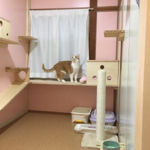 釧路のキャットホテルnekoneです