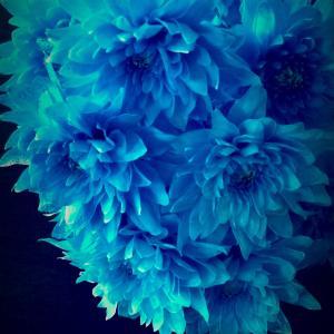 salon   bleu・de・roi [ブルー・ド・ロワ]