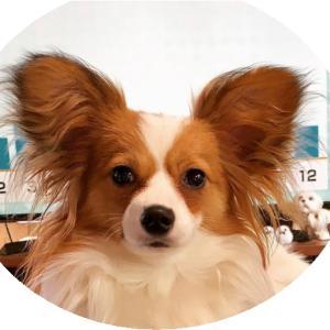 愛犬問題 犬の身になって考えてみよう!
