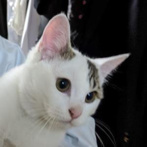 猫背ランナーの願望的目標 フルマラソン サブ3(現在サブ4.5→3.45(ネット))