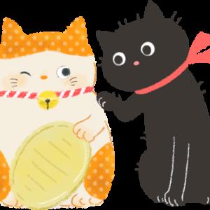 山奥の猫のブログ