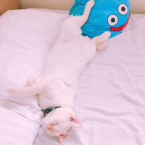 猫好きサラリーマンの株日記