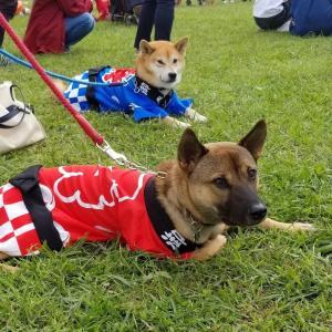 保護犬兄弟 尊と祭の犬連れ旅日記