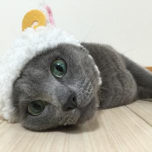 愛猫レン♂と日常