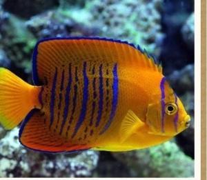 まりりんの海水魚飼育