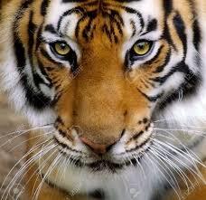 タイガー予想