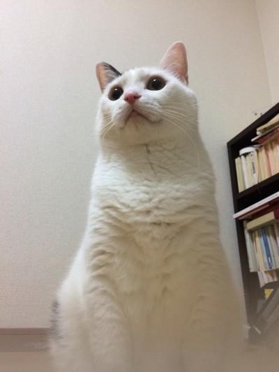 sakiloさんのプロフィール