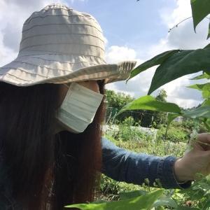 さーやんの無農薬野菜のblog