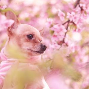 咲紗の、目指せ!日本一の読書家