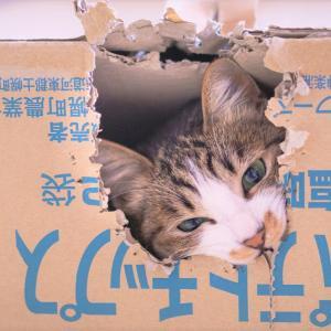 猫動画まとめブログ ねこねこフォーエバー