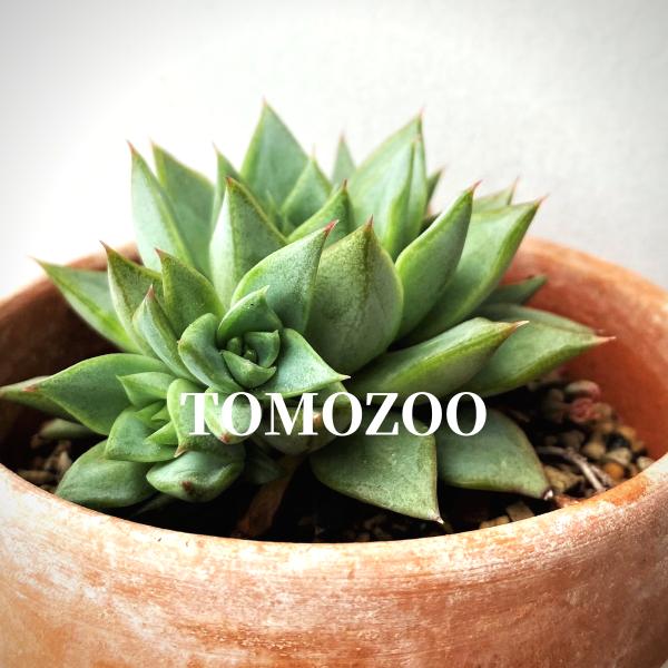 TOMOZOOさんのプロフィール