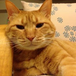 ★ペットロスからのリバース★猫の里親になるブログ