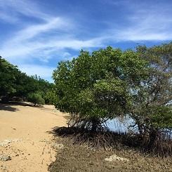 バリ島情報