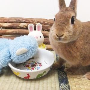 Rabbit Life