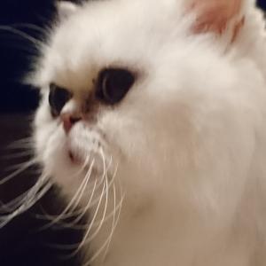 SEの猫になりたい