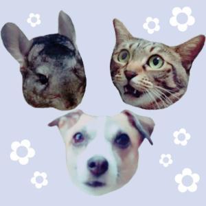 犬と猫とチンチラと