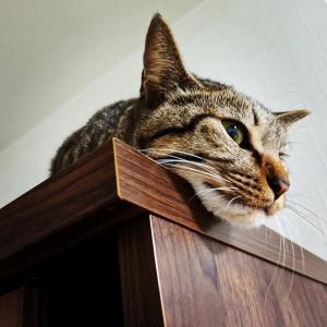 たまに猫日記