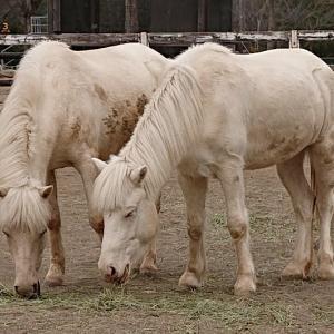 いきがいは育児と競馬