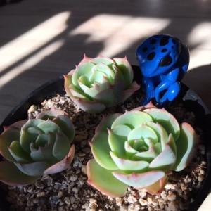 Plante succulente et mousse