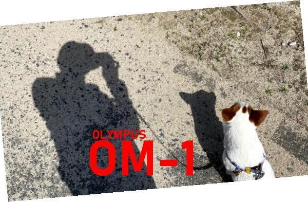 OM-1さんのプロフィール
